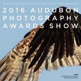 "Photograph of osprey in flight with text ""2016 Audubon Photography Awards Show"""